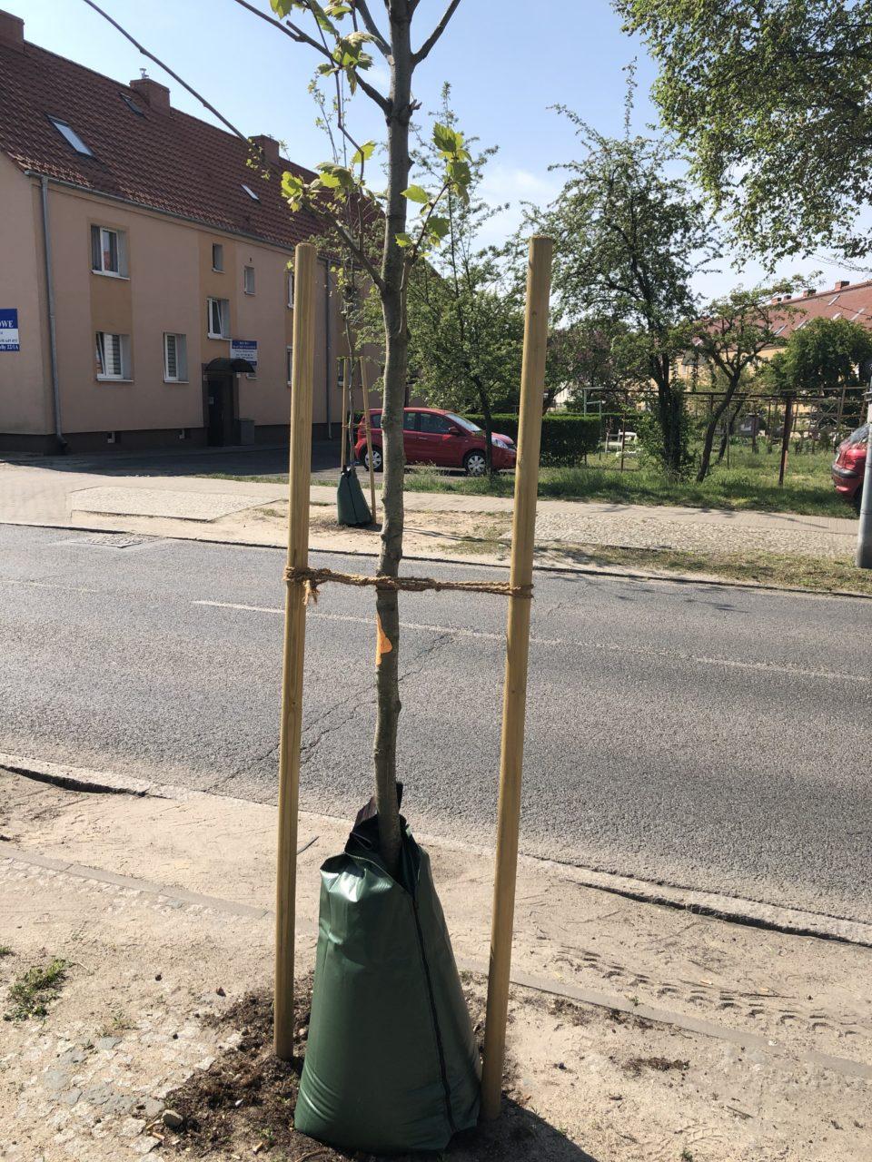Z takimi hydrobuforami posadzone przez gminę drzewa nie zginą!