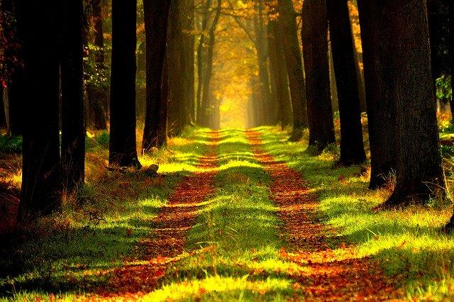 Uwaga! Wprowadzono tymczasowy zakaz wstępu do lasów!