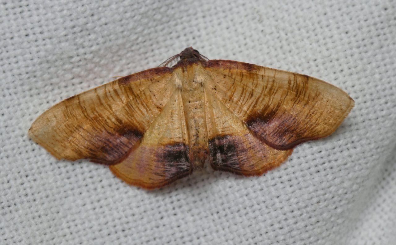 Ćmy! Poznajmy bliżej fascynujący świat owadów z Fundacją Dziupla Inicjatyw Przyrodniczych