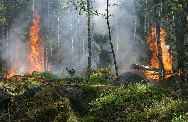 Uwaga! Najwyższy stopień zagrożenia pożarowego w lasach