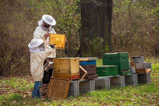 To ważna informacja dla pszczelarzy
